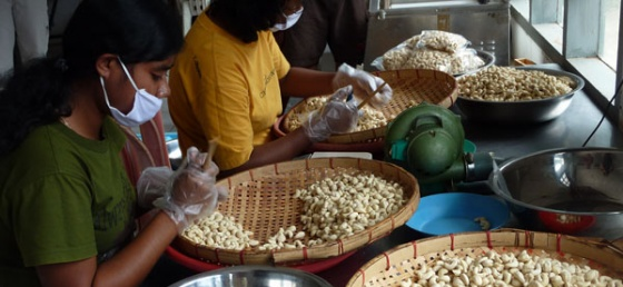 wolowaru, cashew nut processing 1